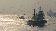 Ticari Amaçlı Su Ürünleri avcılığını düzenleyen 3/1 sayılı tebliğ gereği Su Ürünleri av yasağı 15 Nisan 2015 tarihinde başladı ve 31 Ağustos 2015 tarihinde sona erecektir. Su Ürünleri av yasakları […]